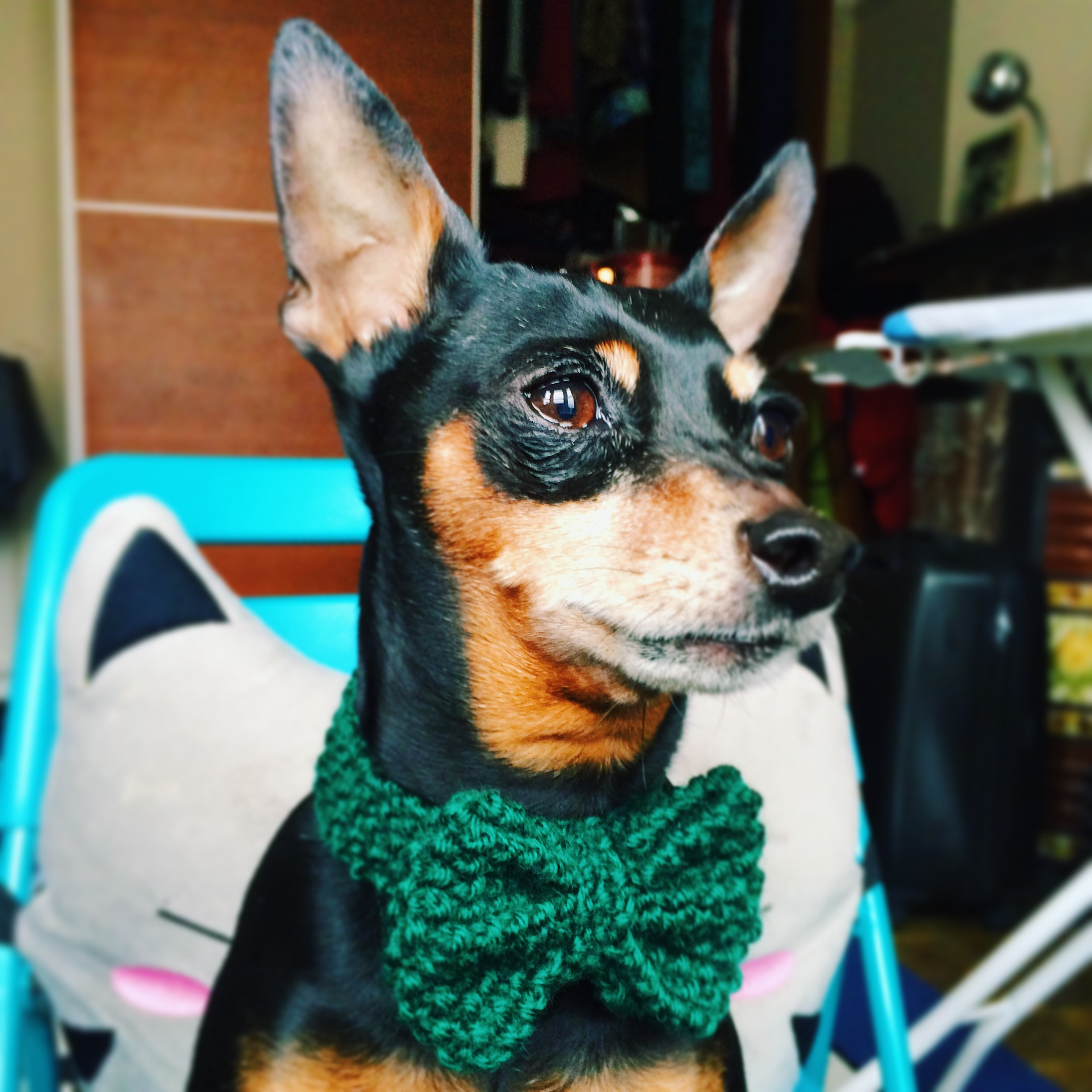 Dapper Dog BowK Knitted Tie